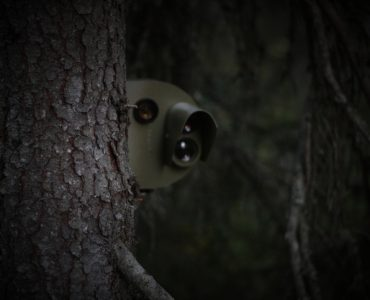 Surveillance camera behind a tree. Vignetting was added.
